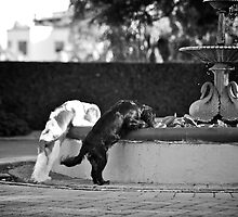 Lucy & Matilda by { wetnosefotos.com  }