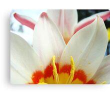 Tulip Garden Flowers White Pink Tulips art Baslee Troutman Canvas Print
