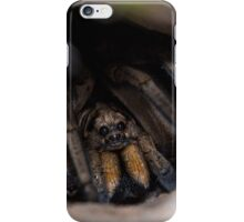 Wolf Spider in Burrow iPhone Case/Skin
