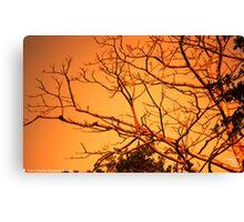 Sun Rise at Sylhet -1 Canvas Print