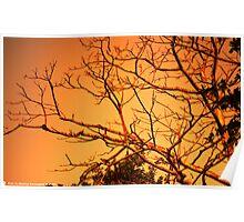 Sun Rise at Sylhet -1 Poster