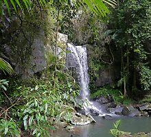 Curtis Falls, Tamborine N.P., Queensland by Margaret  Hyde