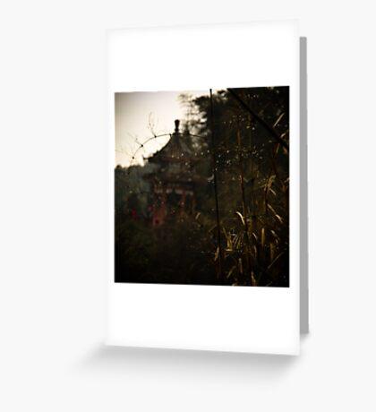 bamboo sea .... Greeting Card