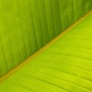 Backlit Banana Leaf Macro by Anna Lisa Yoder