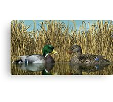 Male and Female Mallard Ducks Canvas Print
