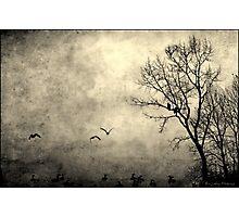Birds of Hatzic Photographic Print