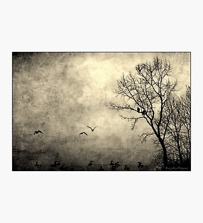 Birds of Hatzic Photographic Print