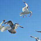 flock of sea gulls by neil harrison