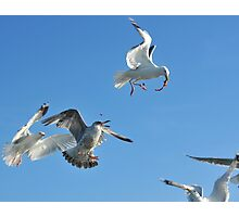 flock of sea gulls Photographic Print