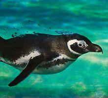 Humboldt Penguin by HelenBeresford