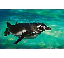Humboldt Penguin Photographic Print
