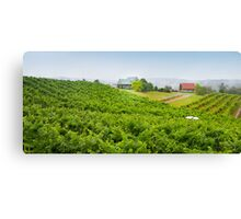 Tom Cap Winery Canvas Print