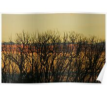 Sunsets over tree - NSW, Australia. Poster