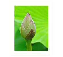 The Water Lily bud... Art Print