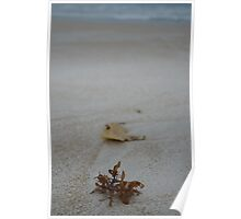Petals on the beach Poster