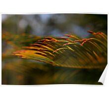 Golden waves-sunset Hunter Valley Poster