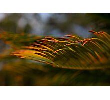 Golden waves-sunset Hunter Valley Photographic Print