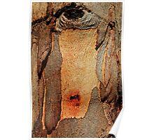 Bleeding Bark-Gum trunk in the sun Poster