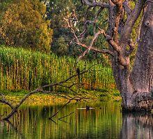 Murray Magic - Wonga Wetlands, Albury , Australia - The HDR Experience by Philip Johnson