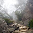 Into the Mist by Jazzyjane