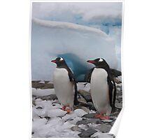 Gentoo penguins. Poster