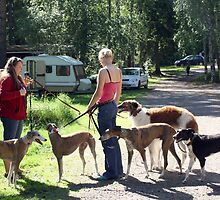 Spanish rescue dog Summer meeting in 2010 by homesick