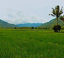 Indonesian Rice Field Scene by kaledyson