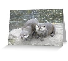 Asian  Short Clawed Otters Greeting Card
