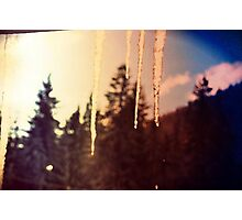 Icicle Forest Photographic Print