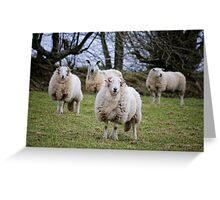 Rams Greeting Card
