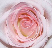 Pale Pink by Luci Mahon
