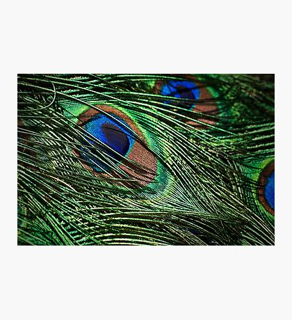 Iridescent plumage Photographic Print