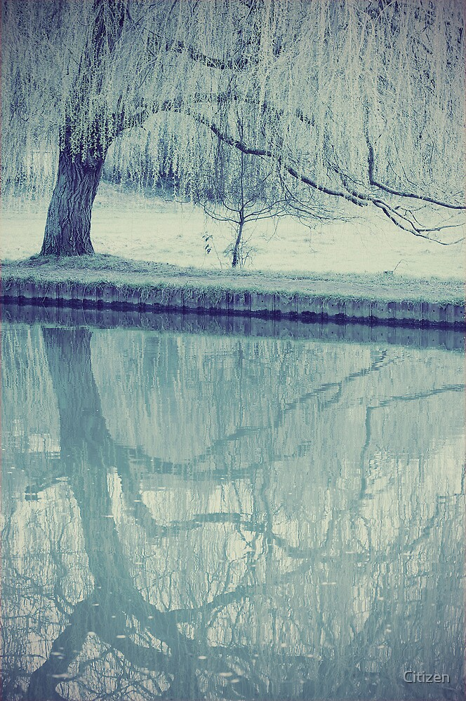 Weeping Willow by Nikki Smith