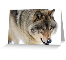 Winter in Canada / Lone Wolf Greeting Card