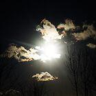 sun through the trees by zoena