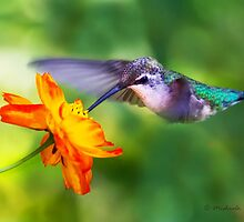 Ruby-throated Hummingbird on cosmos by Michaela Sagatova