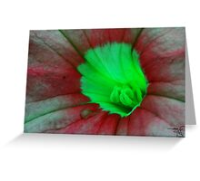 Floral macro-Pitunia Greeting Card