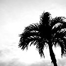 Solitary Palm by Madison Jacox