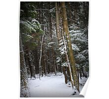 crooked trees Poster