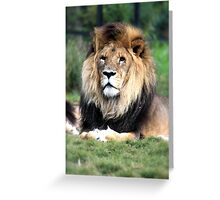 Lion, Melbourne Zoo Greeting Card