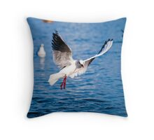 Gull in the air above the water (Larus ridibundus) Throw Pillow
