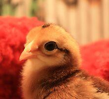 an alert chick by caleb baker
