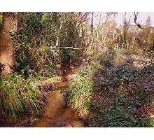 Woodland stream with bridge in Upton Wood Photographic Print