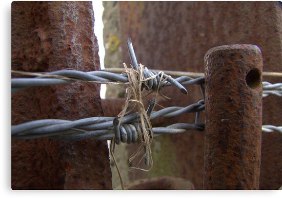 Barbed Wire by Hans Bax