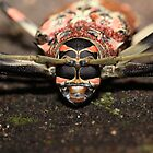 Amazon Longhorn Beetle by Paul Duckett