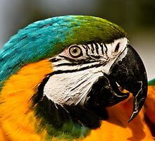 Portrait of a Parrot  by Selina Ryles