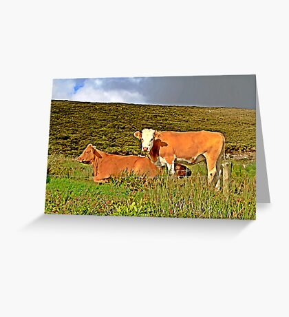 Red cows in an irish field Greeting Card
