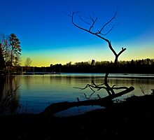 The Lone Branch At Sunset by DBGuinn