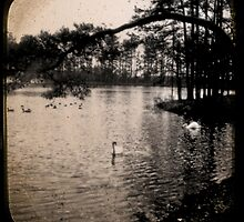 Lake with Swans by klindsey