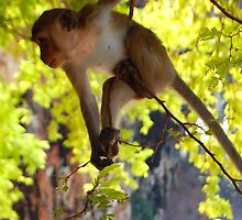 Thai Monkey- Railay, Thailand by Breanna Stewart